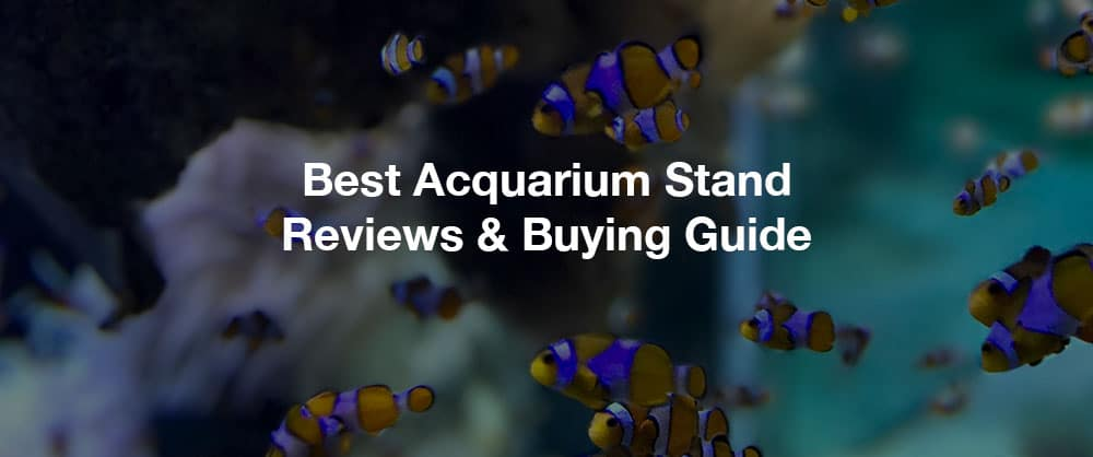 best-acquarium-stand-reviews